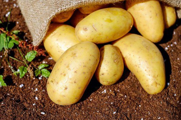 Kartoffeln Erde